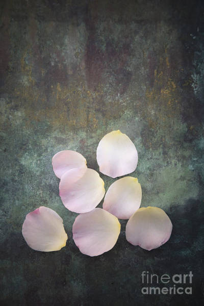 Photograph - Rose Petals by Maria Heyens