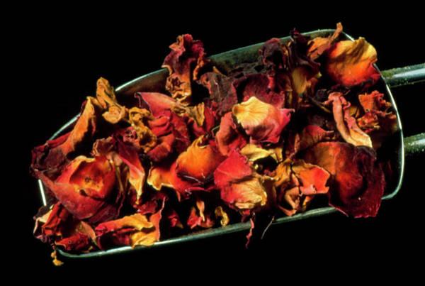 Medicinal Photograph - Rose Petals by Th Foto-werbung/science Photo Library
