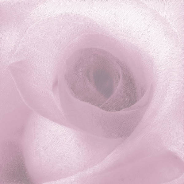 Painting - Rose Pink On White by Tony Rubino