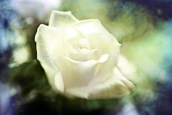 Photograph - Rose Revisited by Beverly Stapleton