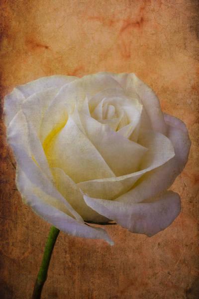 Wet Rose Wall Art - Photograph - Rose Romance by Garry Gay