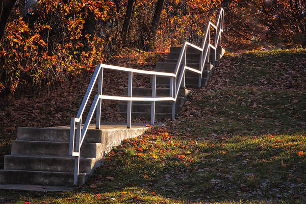 Photograph - Rose Tree Railing In Color by Tom Singleton