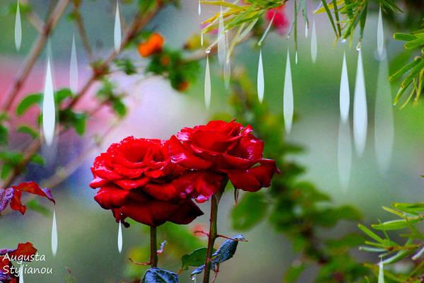 Rose Bud Digital Art - Rose Water Drops by Augusta Stylianou
