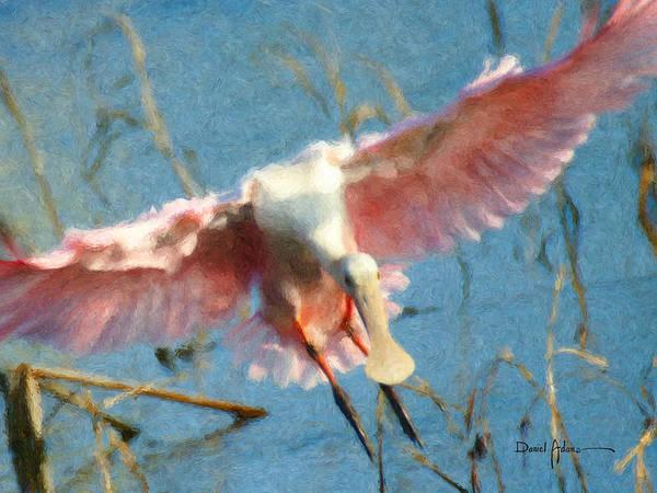 Painting -  Da203 Roseate Spoonbill By Daniel Adams by Daniel Adams