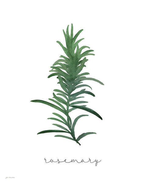 Wall Art - Painting - Rosemary by Jo Moulton