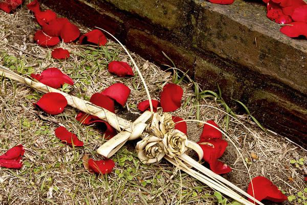 Photograph - Roses by Carol Erikson