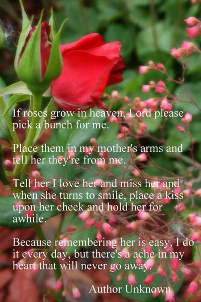 Photograph - Roses In Heaven by Kay Novy
