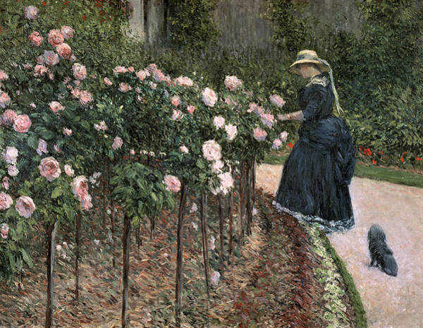 Gardening Wall Art - Painting - Roses In The Garden At Petit Gennevilliers by Gustave Caillebotte