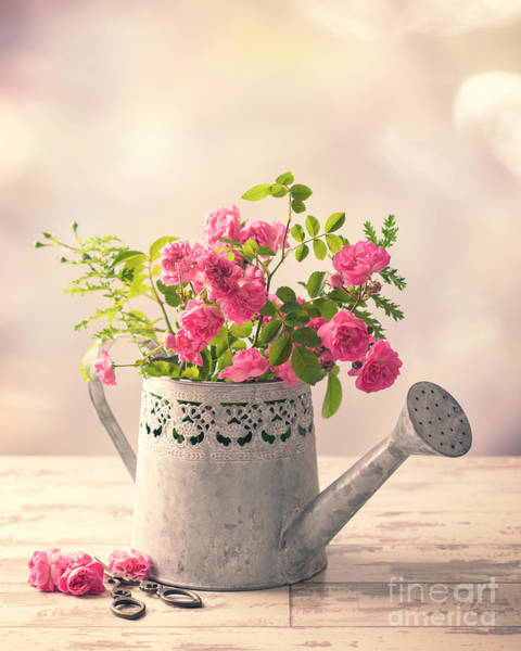 Wall Art - Photograph - Roses In Watering Can by Amanda Elwell