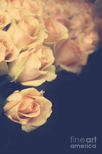 Photograph - Roses by Jelena Jovanovic