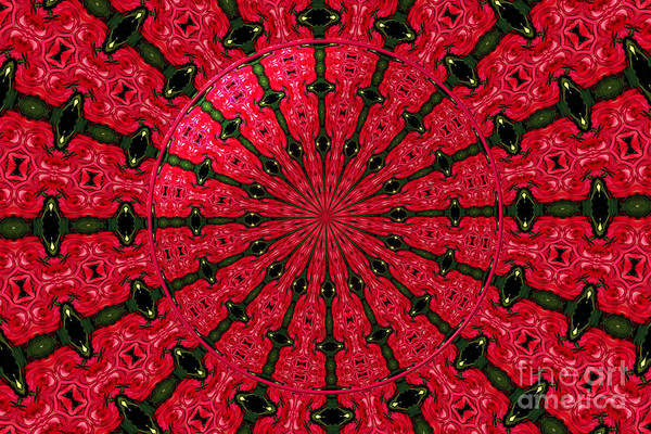 Photograph - Roses Kaleidoscope Under Glass 24 by Rose Santuci-Sofranko