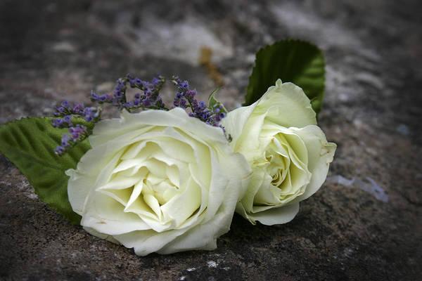 Photograph - Roses by Kelly Hazel
