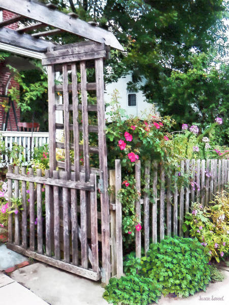 Photograph - Roses On A Weathered Picket Fence by Susan Savad