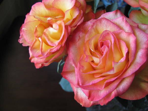 Photograph - Roses On Dark Background by Anita Burgermeister
