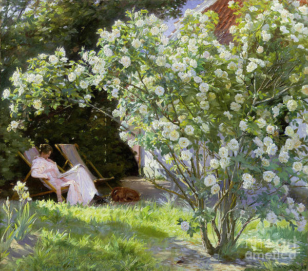 Woman Reading Wall Art - Painting - Roses by Peder Severin Kroyer