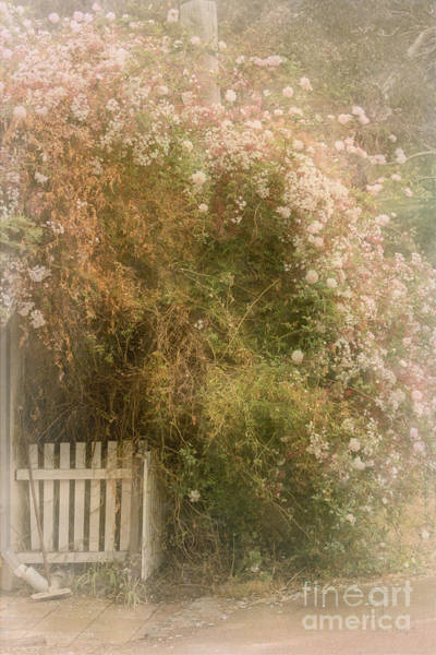 Photograph - Rosey Entry by Elaine Teague