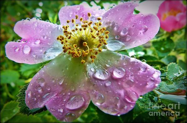 Rosey Raindrops Art Print