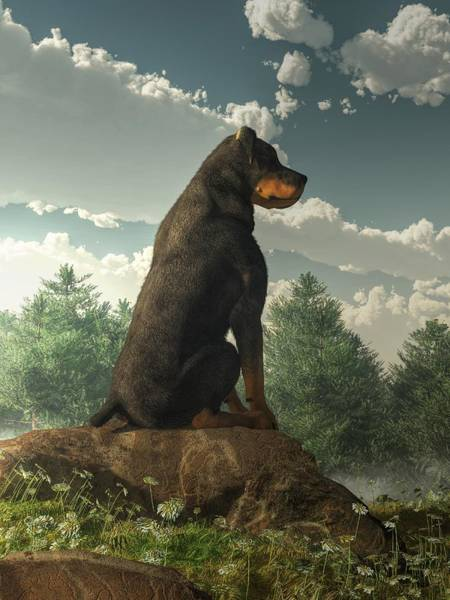 Digital Art - Rottweiler  by Daniel Eskridge