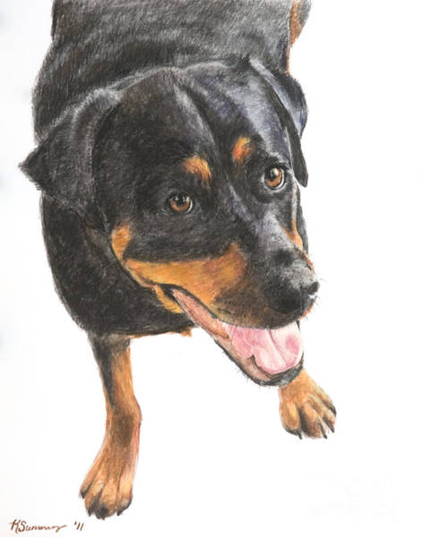 Art Print featuring the painting Rottweiler Looking Up by Kate Sumners