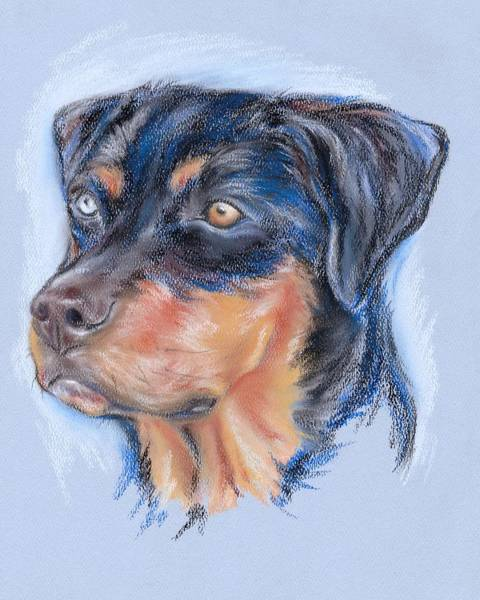 Pastel - Rottweiler Mix Portrait by MM Anderson