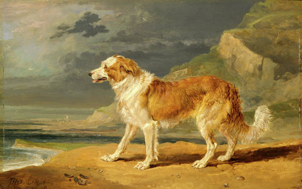 Wall Art - Painting - Rough-coated Collie Signed In Brown Paint by Litz Collection