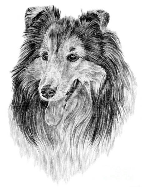 Drawing - Rough Collie - Channing by Pencil Paws