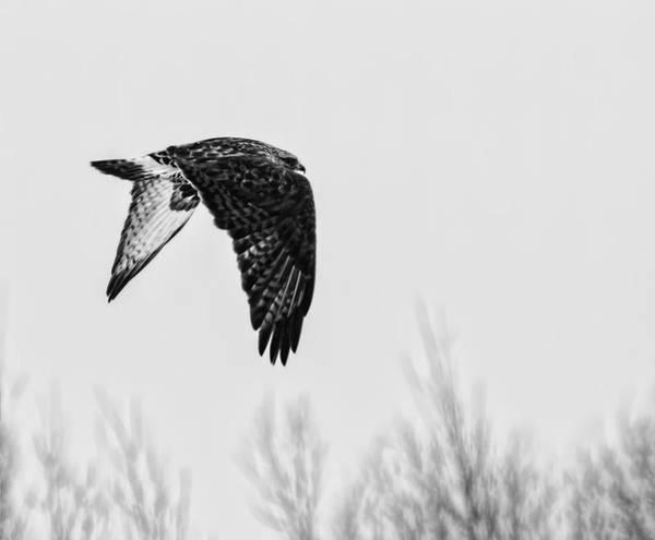 Wall Art - Photograph - Rough-legged Hawk 2 by Thomas Young