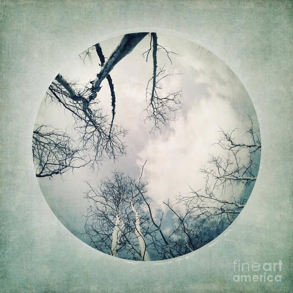 Fisheye Photograph - round treetops I by Priska Wettstein