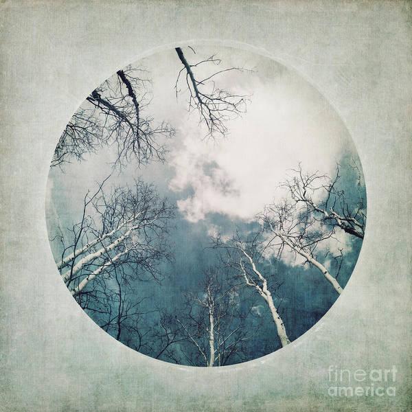 Birch Tree Photograph - round treetops III by Priska Wettstein