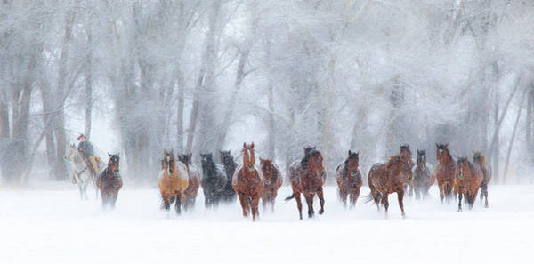 Herd Of Horses Wall Art - Photograph - Round Up In The Snow by Betty Wiley