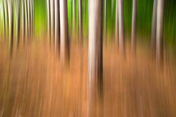 Photograph - Row By Row. Streaky Trees by Rob Huntley