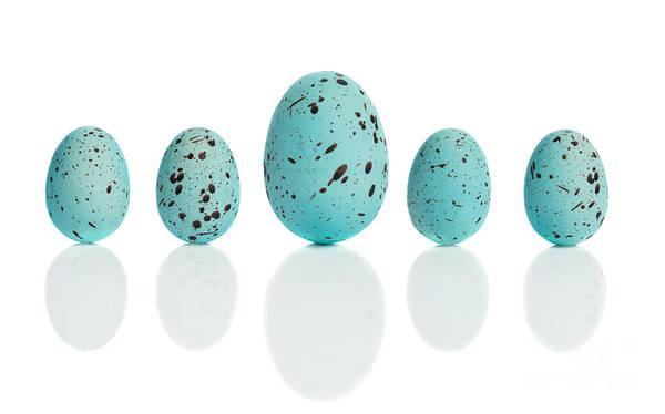 Robin Egg Blue Photograph - Row Of Blue Eggs by Amanda Elwell