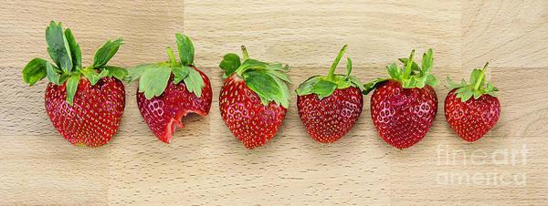 Wall Art - Photograph - Row Of Strawberries  by Svetlana Sewell