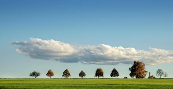 Copy Photograph - Row Of Trees by Thomas Winz