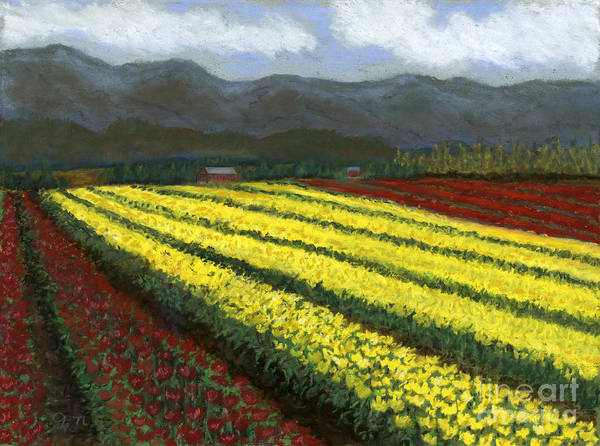 Skagit Valley Painting - Row Upon Row Of Tulips by Ginny Neece
