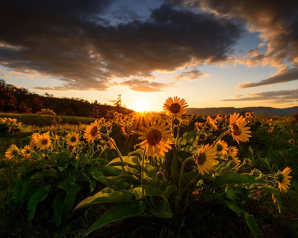 Rowena Photograph - Rowena Crest Sunset by Dan Mihai