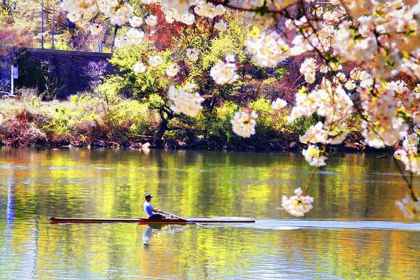 Photograph - Rowing In The Blooms by Alice Gipson