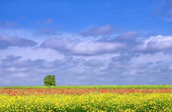 Fredericksburg Wall Art - Photograph - Rows Of Wildflowers by Dean Fikar