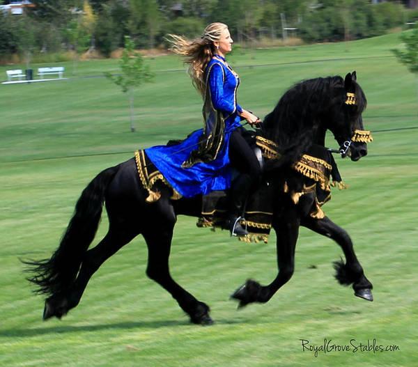 Photograph - Royal Friesian by Carol Whitaker
