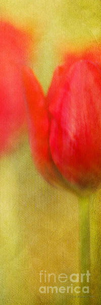 Photograph - Ruby Slippers by Beve Brown-Clark Photography