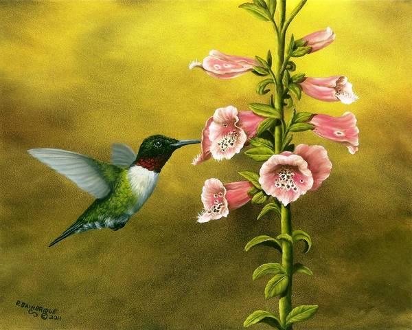 Foxglove Wall Art - Painting - Ruby Throated Hummingbird And Foxglove by Rick Bainbridge