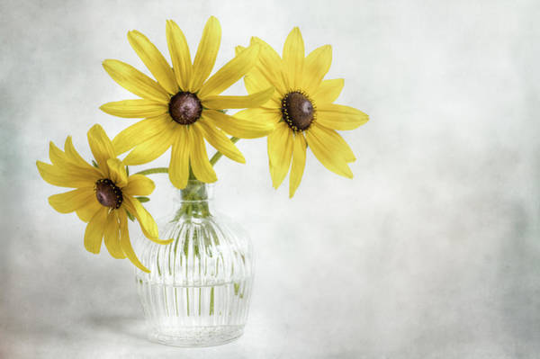 Wall Art - Photograph - Rudbeckia by Mandy Disher