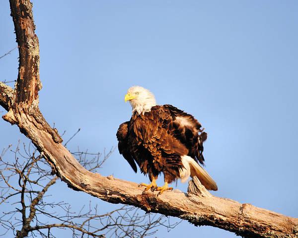 Photograph - Ruffled Feathers by Jai Johnson