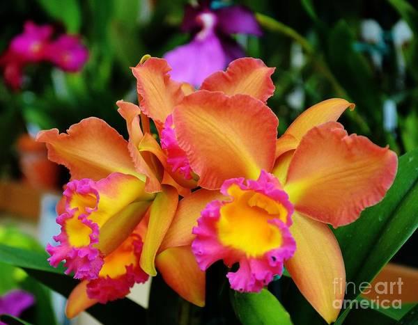 Ohau Wall Art - Photograph - Ruffled Orchid 2 by Brenda Dorman