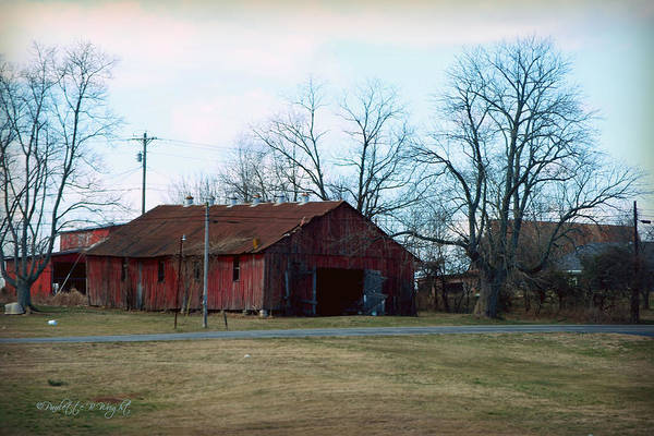Photograph - Rugged Shed II by Paulette B Wright