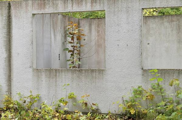 Ruins Of A Building, Prefabricated Concrete Unit Of A House, Recaptured By Nature, Mecklenburg-western Pomerania, Germany Art Print by Frederik