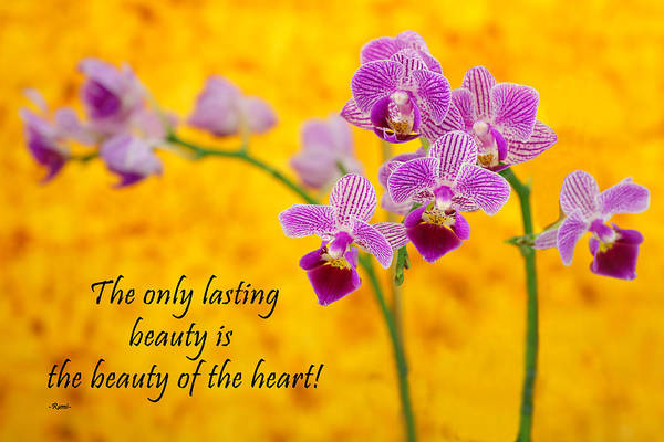 Photograph - Rumi Quote-1 by Rudy Umans