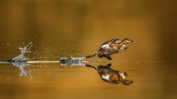Flight Feathers Photograph - Run For Fun by Faisal Alnomas