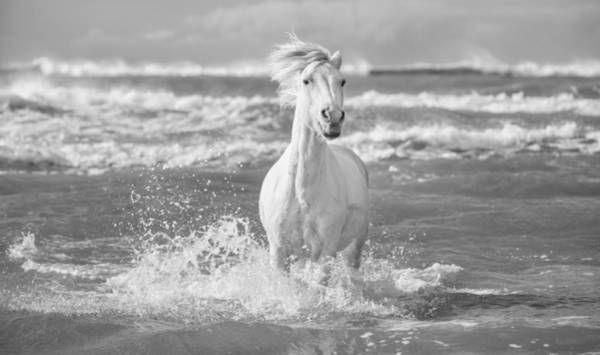 White Horse Photograph - Run White Horses I by Tim Booth