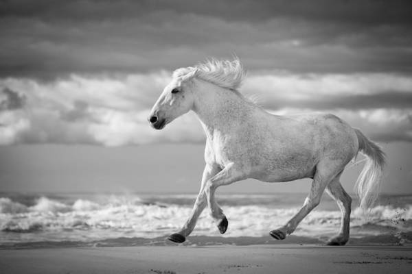 White Horse Photograph - Run White Horses V by Tim Booth